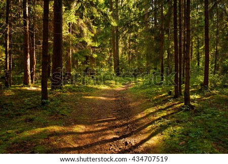 lights and shadows in the forest - stock photo