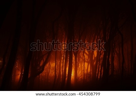Lights in foggy forrest - stock photo