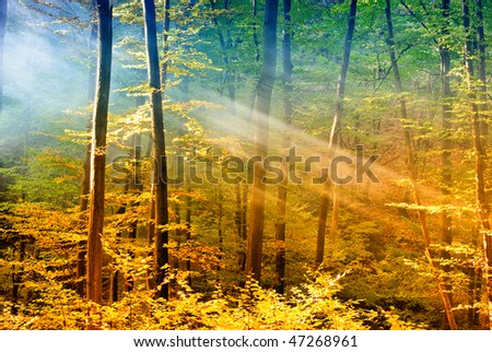 Lights in the forest - stock photo