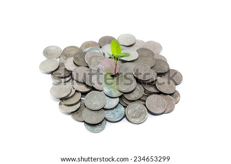 Like a tree that grows money - stock photo