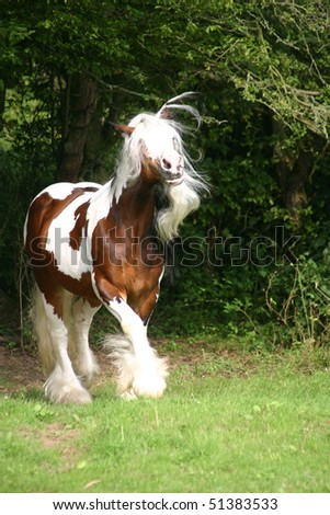 like a unicorn - stock photo