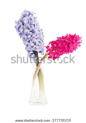 Lilac and pink hyacinths in vase, isolated over white - stock photo