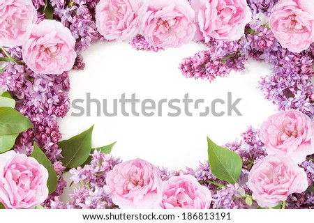 Lilac and pink rose background isolated on white - stock photo