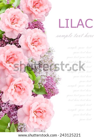 Lilac and roses flowers background isolated on white with sample text - stock photo