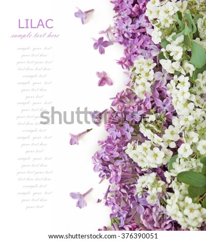 Lilac and tree blossom background isolated on white with sample text