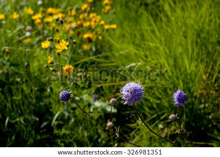 Lilac and yellow wildflowers in green field in sunny day