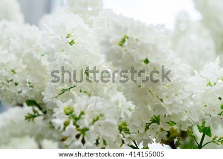 Lilac blooming tree with white blooming flowers  - stock photo
