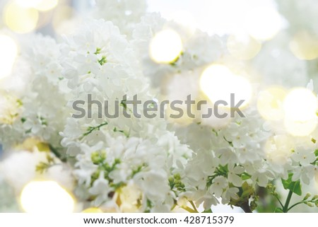 Lilac blooming tree with white blooming flowers, retro toned - stock photo