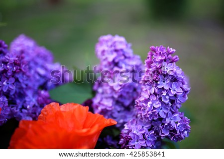 Lilac blooms. A beautiful bunch of lilac closeup. Green branch with spring lilac flowers. Lilac bush. Lilac flowers on tree in garden. - stock photo