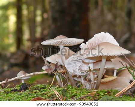 Lilac bonnet - stock photo