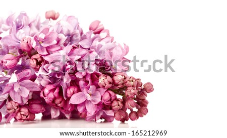 Lilac branch. Lilac flowers. Lilac bouquet. - stock photo