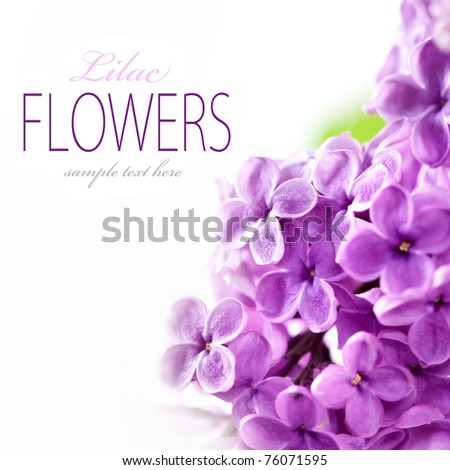Lilac branch on a white background with sample text - stock photo