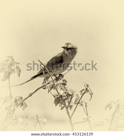 Lilac Breasted Roller in the Chobe National Park - Botswana, South-West Africa (stylized retro) - stock photo