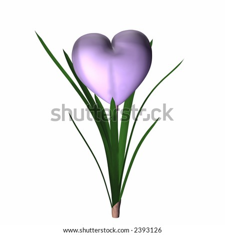 Lilac colored valentine heart in full bloom. Isolated on a white background. - stock photo