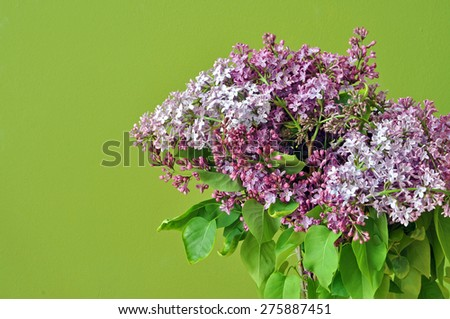 Lilac flower background - stock photo