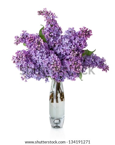 Lilac Flower in vase isolated on white