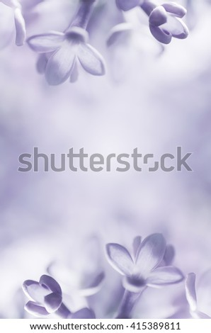 lilac flowers abstract background frame for text - stock photo