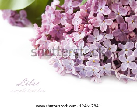 Lilac flowers background isolated on white with sample text - stock photo