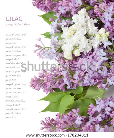 Lilac flowers background isolated on white with sample text