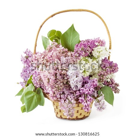 Lilac flowers basket isolated on white background