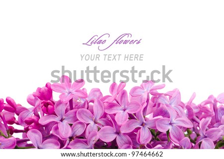Lilac flowers branch isolated on white background with sample text - stock photo