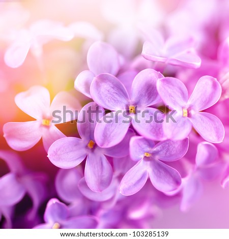 Lilac flowers in spring - stock photo