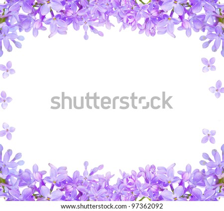 lilac flowers isolated on white background - stock photo