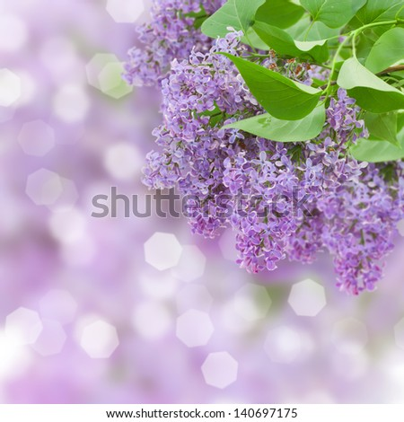 Lilac flowers tree on defocused background - stock photo