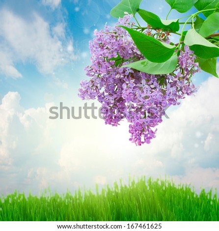 Lilac flowers  with grass and  sky  background - stock photo