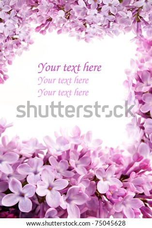 lilac frame - stock photo