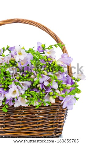 Lilac freesia in the wicker isolated on white - stock photo