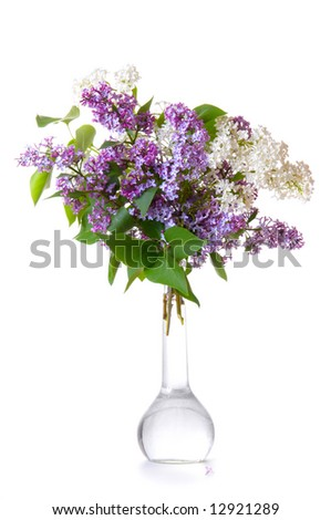 Lilac in a bottle