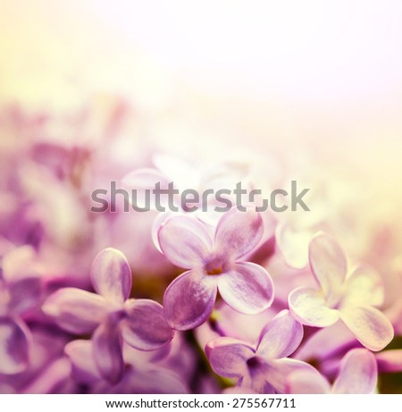 Lilac macro shot - stock photo