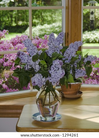 Lilac on table in window - outside view of spring and azaela bushes.