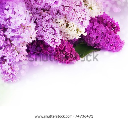 Lilac Spring Flower border design - stock photo