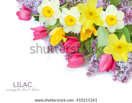 Lilac, tulips and narcissus flowers background isolated on white with sample text - stock photo
