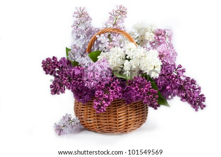 Lilacs in a basket - stock photo