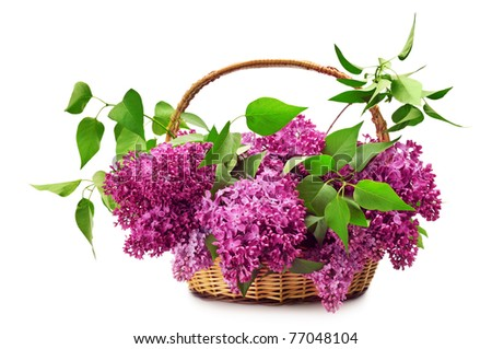 Lilacs in a basket isolated on a white background.