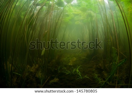 Lilies and other aquatic vegetation grow along the shallow edge of a pond in New England.  Freshwater ponds and lakes offer views of enclosed aquatic ecosystems. - stock photo