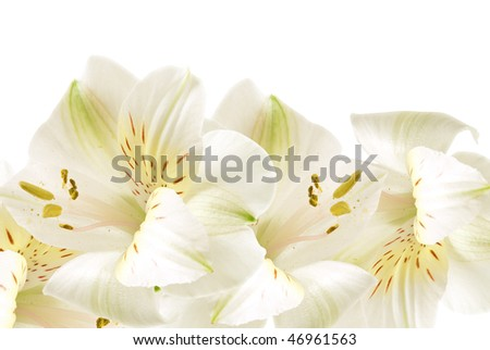 Lilies Background