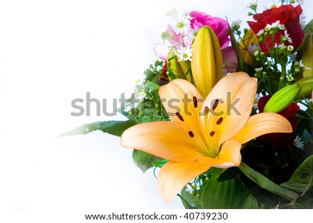 Lilies flower - stock photo