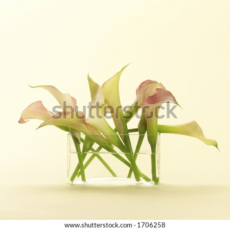 Lilies in glass - stock photo