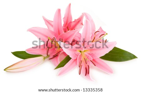 Lilies Isolated on White