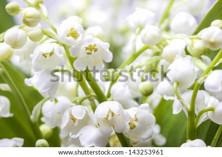 Lilies of the valley. Closeup, selective focus - stock photo