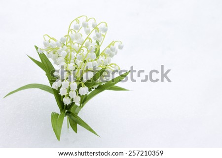 Lilies of valley in snow, close-up. 8 March concept - stock photo