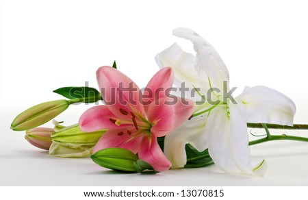 Lilium isolated on white - stock photo