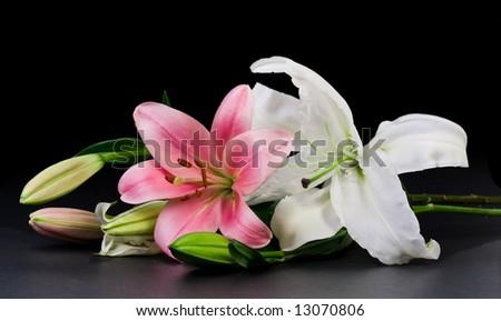 Lilium with Black Background - stock photo