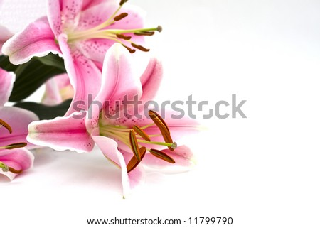 Lillies on white back ground - stock photo