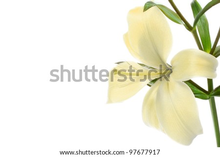 Lilly flower - stock photo