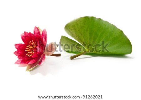 lilly on white background - stock photo